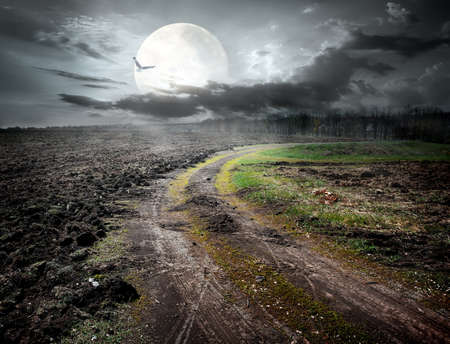 forest animal: Country road under moon and flying bird Stock Photo