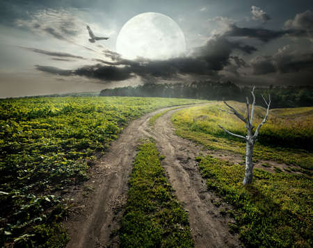 fool moon: Dry tree near country road under fool moon. Elements of this image furnished by NASA