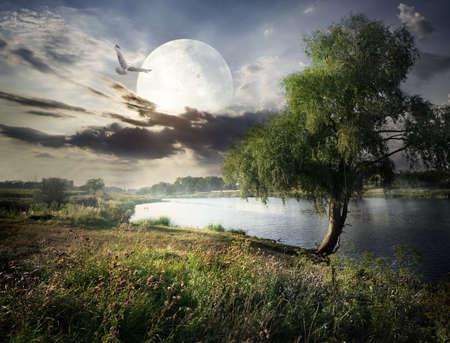 Wilg in de buurt van de rivier en de vogels onder de volle maan. Elementen van deze afbeelding geleverd door NASA