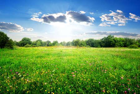 美しい春の牧草地に野の花