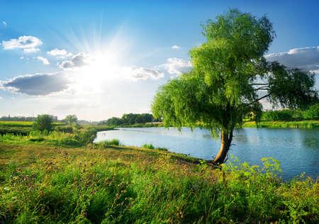 晴れた日の穏やかな川に近い美しいヤナギ 写真素材
