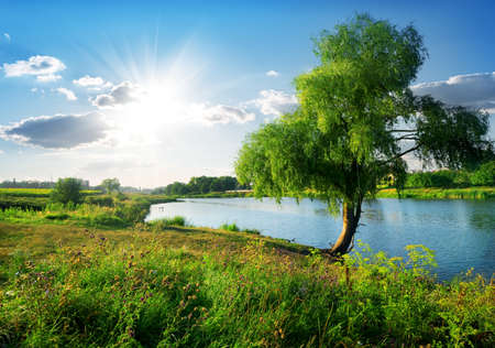 osier: Beautiful osier near calm river in sunny day Stock Photo
