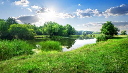晴れた日の森で穏やかな川