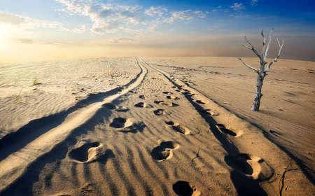 albero secco: Albero secco nel deserto di sabbia al tramonto