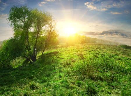 over the hill: El brillo del sol sobre la colina con la hierba verde