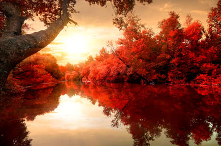 Red leaves on trees along the river in autumn Banco de Imagens - 38135238