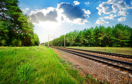 forest railroad: Railroad through the pine forest at sunny day