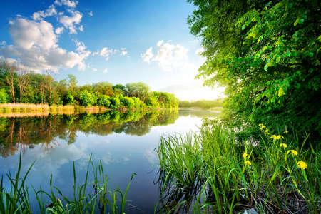 sol: Árvores por rio calmo da manhã Imagens