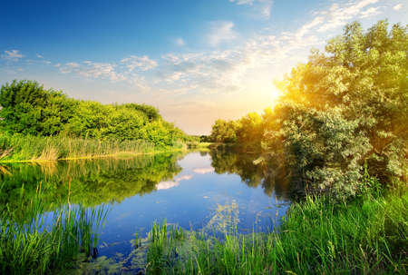 water grass: Yellow sunset over the river in spring