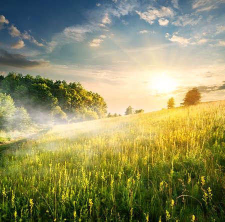 dia soleado: Mañana brumosa sobre el floreciente campo en verano Foto de archivo