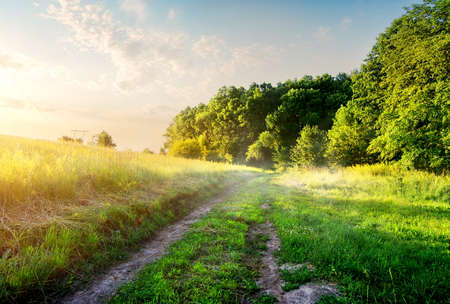 Field with country road in the morning Foto de archivo