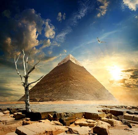 Big bird over pyramid and dry tree
