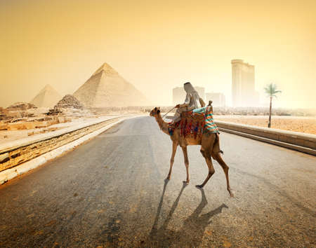 bedouin: Bedouin and camel on asphalted road to Giza and pyramids Stock Photo