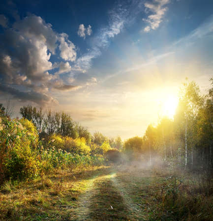 trails: Fog in autumn wood at the sunrise Stock Photo