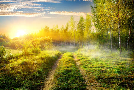 colorful sunrise: Fog over country road in birch grove Stock Photo