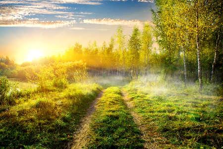 Nebbia su strada di campagna in boschetto di betulle Archivio Fotografico
