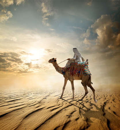 camel: Bedouin rides on camel through sandy desert