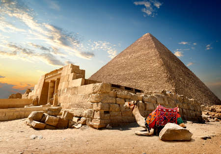 egyptian pyramids: Camel rests near ruins of entrance to pyramid Stock Photo