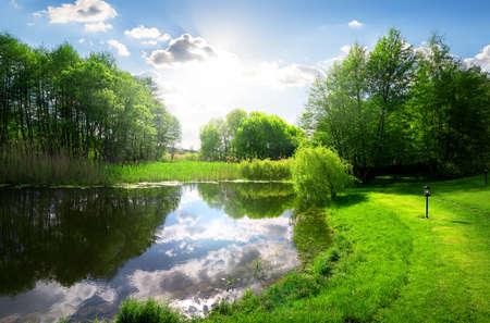 日光の下で穏やかな川の近く緑豊かな公園 写真素材