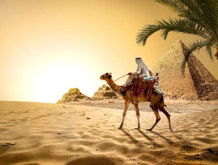 Kameel in de buurt van piramides in hete woestijn van Egypte