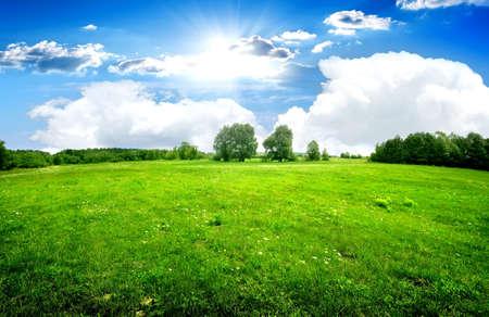 緑の芝生と美しい雲の下の木