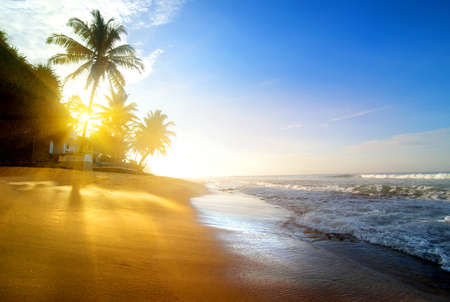 sunrise ocean: Palms on the sandy beach near ocean at sunrise Stock Photo