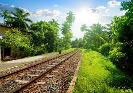 forest railroad: Railroad through green palm forest in Sri Lanka Stock Photo