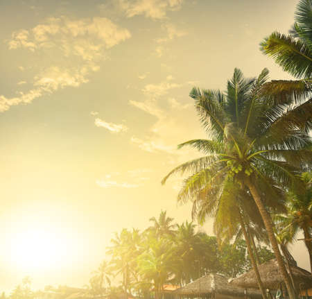 tropical tree: Palm trees on a background of sunset Stock Photo