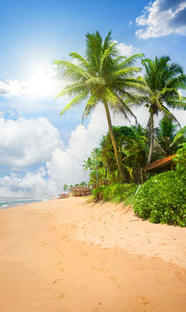 Sandy beach with big green palm trees