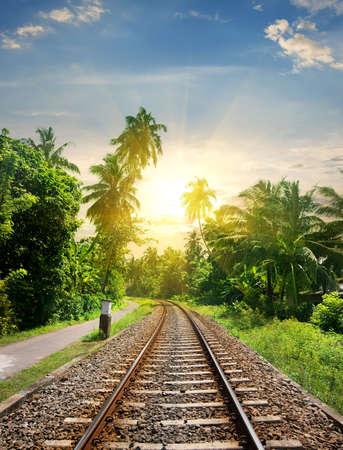 Coucher de soleil sur chemin de fer dans la jungle du Sri Lanka