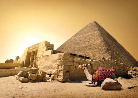 Camel and ruined pyramid of Cheops in Cairo