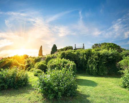 voroncov: Bushes in Vorontsov garden