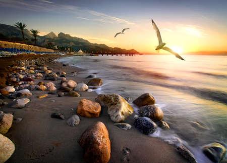 Seagulls over beach Banco de Imagens - 81121655