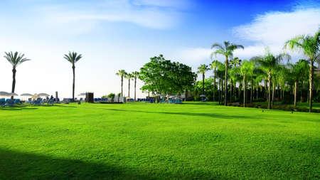 トルコで緑の草原