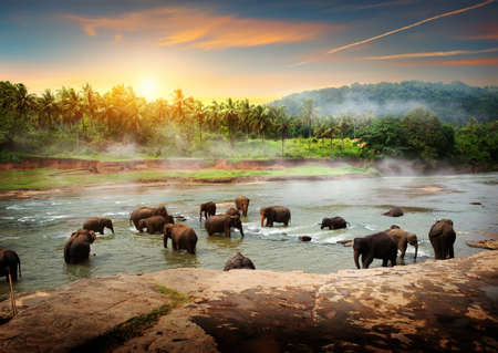 Elephants in Sri Lanka Stock Photo