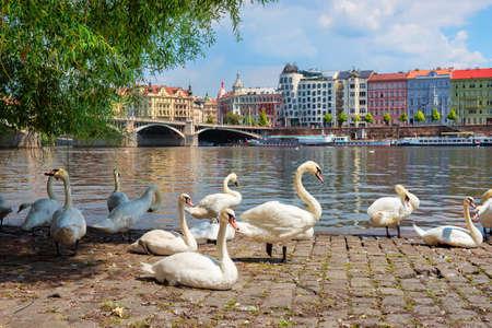 Dancing House and swans Reklamní fotografie