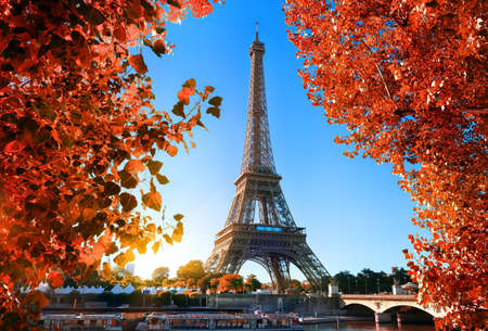 Maple tree in Paris Stock Photo - 110767828