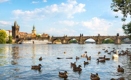Birds on river Vltava