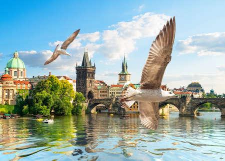 Seagulls and bridge