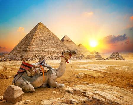 Wielbłąd i piramidy
