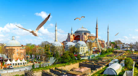 Seagulls and Hagia Sophia