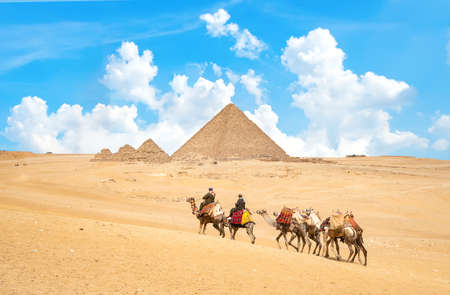 Caravan of camels 写真素材