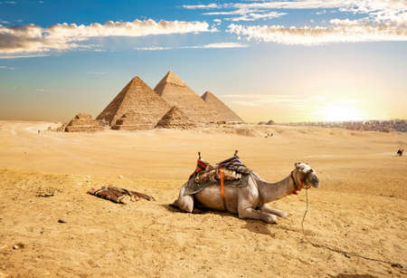 Camel and Pyramids Stock Photo