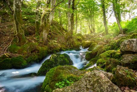 Mountain river Tara 写真素材