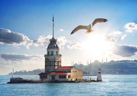 Seagull flying near Maiden's Tower in Istanbul at day, Turkey 版權商用圖片