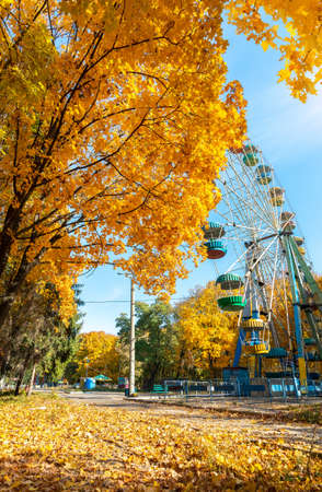 Maples in autumn park at day and ferris wheel