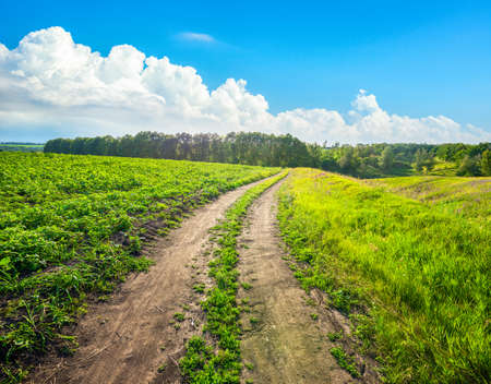 Country road in wild nature in sunny day Banco de Imagens