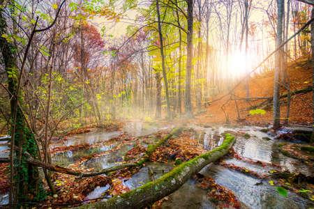 Cascade mountain river in a forest in autumn Banco de Imagens