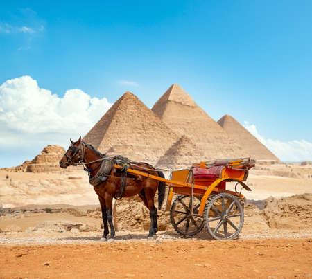 Horse of the pyramids in Giza Banco de Imagens