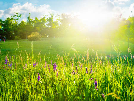 Sunny meadow with white flowers and trees Banco de Imagens